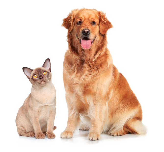 cat-dog-png2.png